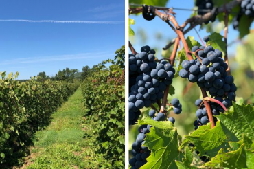 Experience Vermont Wine on the Lake Champlain Tasting Trail