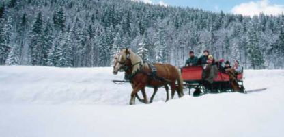 'Tis the Season for Sleigh Rides!