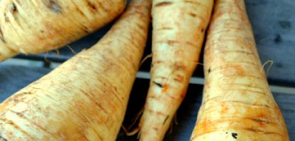 On the Menu - Spring-Dug Parsnips