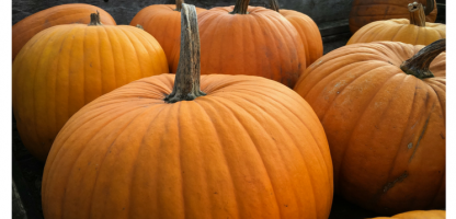 15th Annual Pumpkin Festival at Cedar Circle Farm  Sunday, October 8— Family Fun!