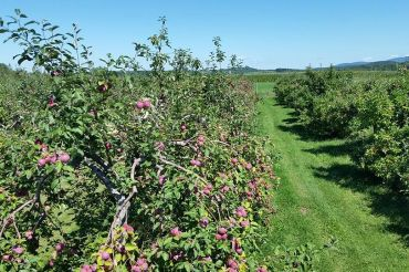 Northcourt Orchard